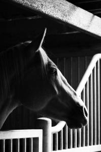 paarden natural horse sense loenen