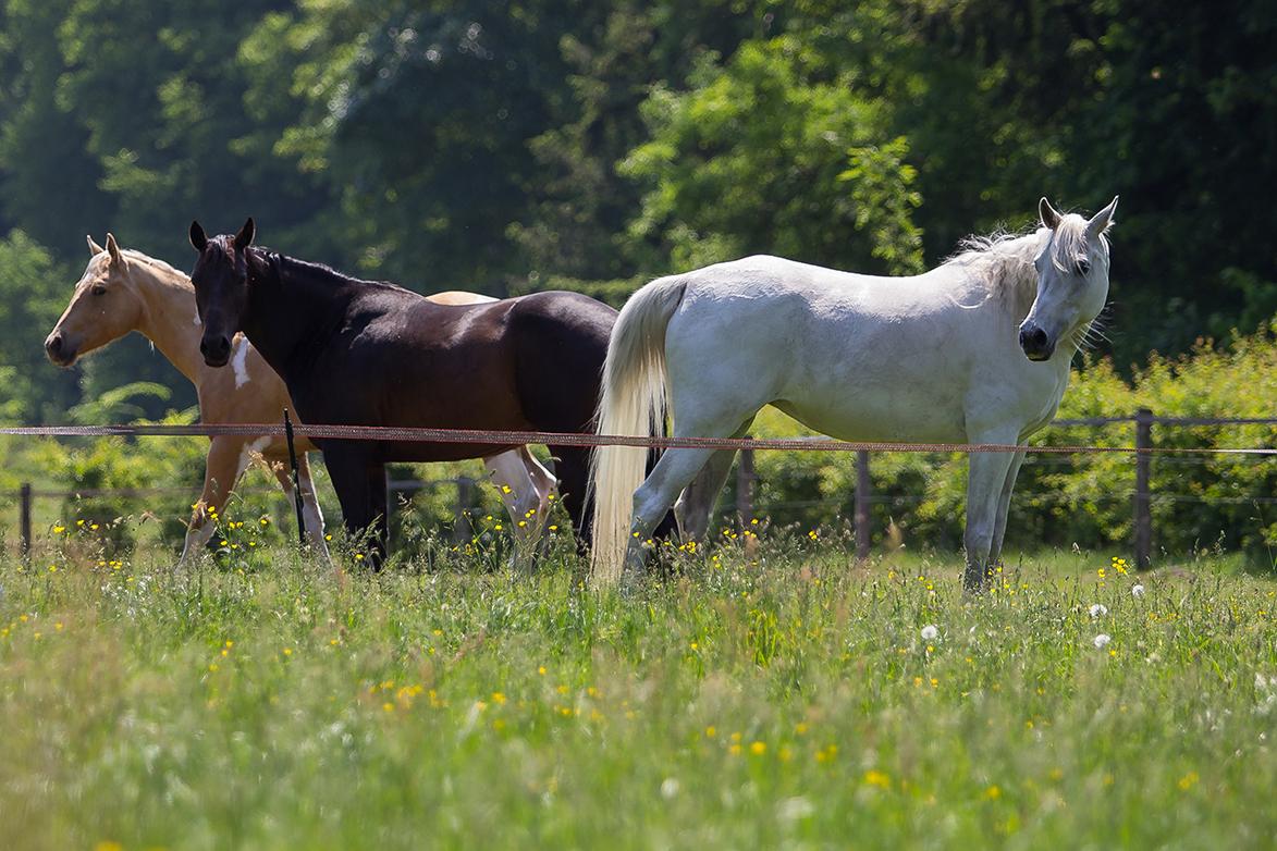 Zooantropologie Natural Horse Sense Loenen