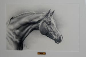 Hagar-paard-natural-horse-sense-loenen