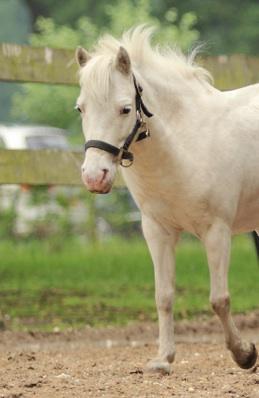 Lotje-paarden-natural-horse-sense-loenen