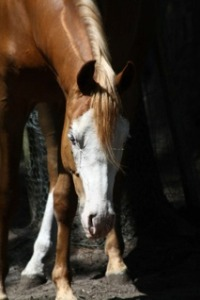 Nino-paard-natural-horse-sense-loenen